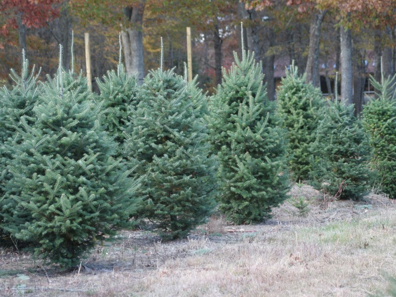 How To Care For A Live Christmas Tree Prevent Deadly Fire