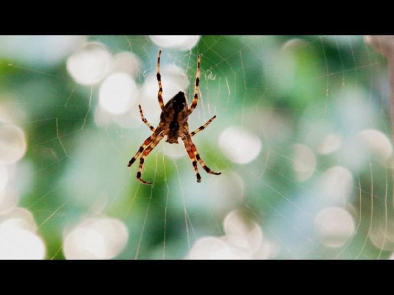 Garden Good Guys – Spiders | San Anselmo, CA Patch