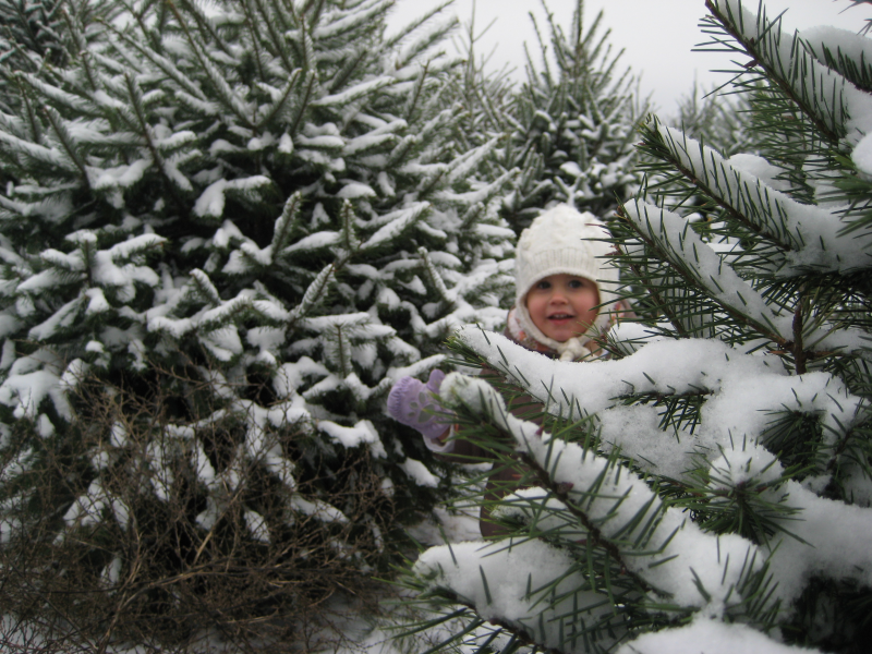 Your Guide to Litchfield County Christmas Tree Farms - Your Guide To Litchfield County Christmas Tree Farms Woodbury, CT