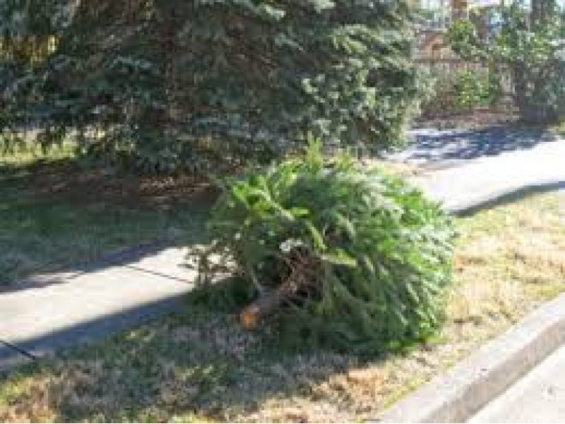 What to Do with Your Christmas Tree - Dunwoody, GA Patch
