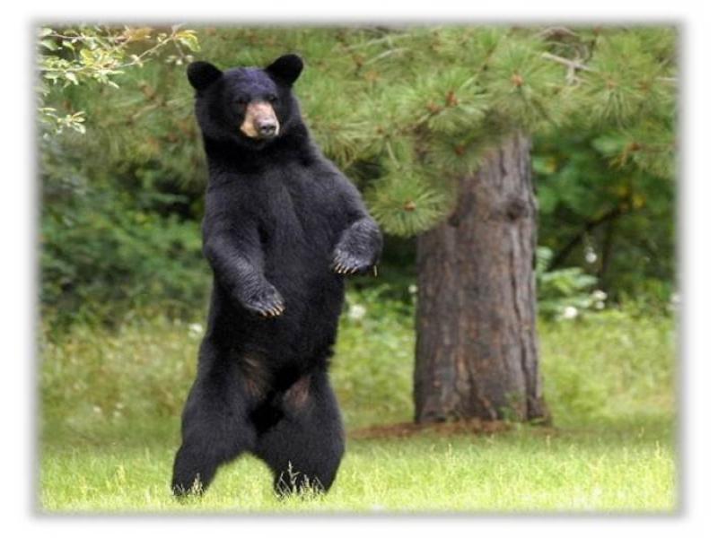 Farmington Animal Control Officer Giving Bear Presentation