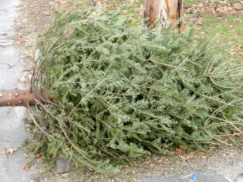 County Offering Free Christmas Tree Recycling | Moorestown, NJ Patch