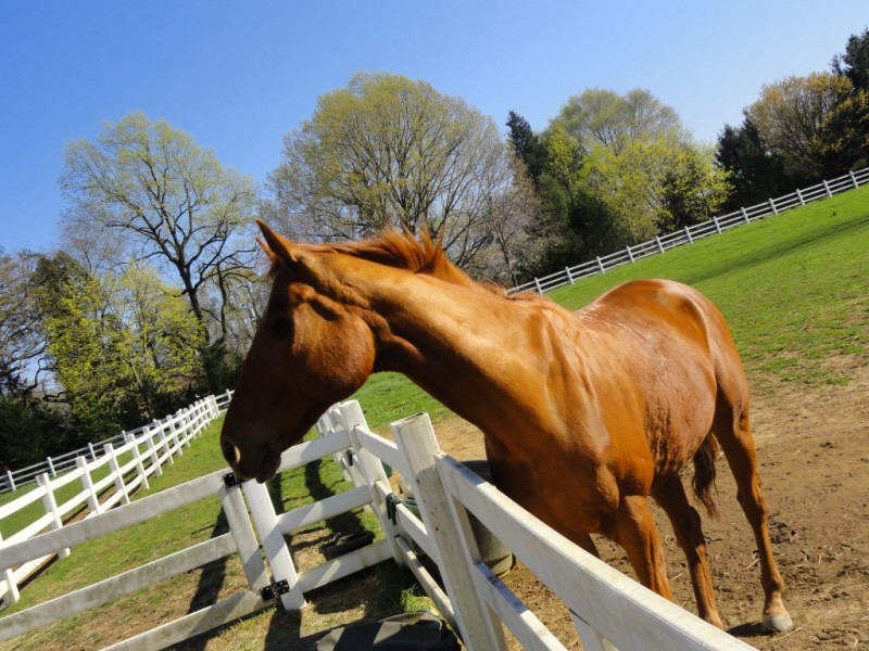Retired Racehorses Have A Home On Moorestown Farm