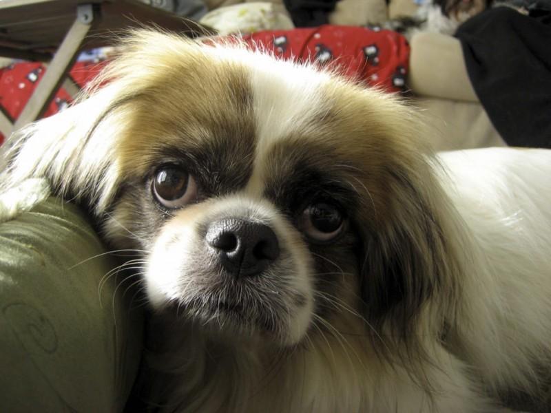 Dog Rescue Fairfax Va