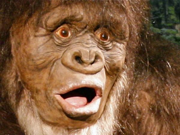 Is Bigfoot Real? - Renton, WA Patch