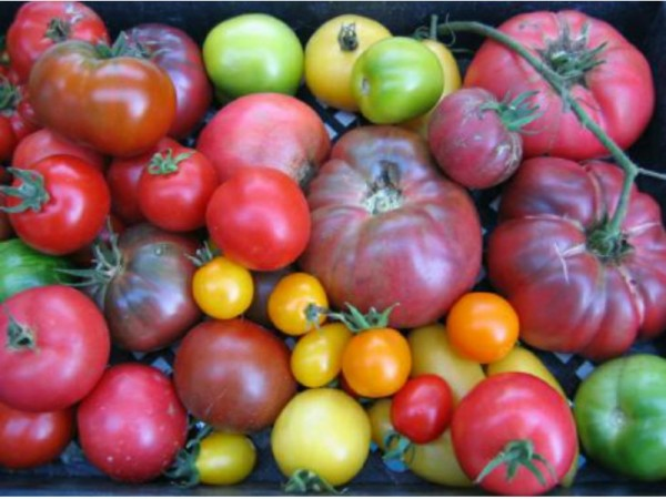where to find homegrown tomatoes and more fresh produce in se, Natural flower