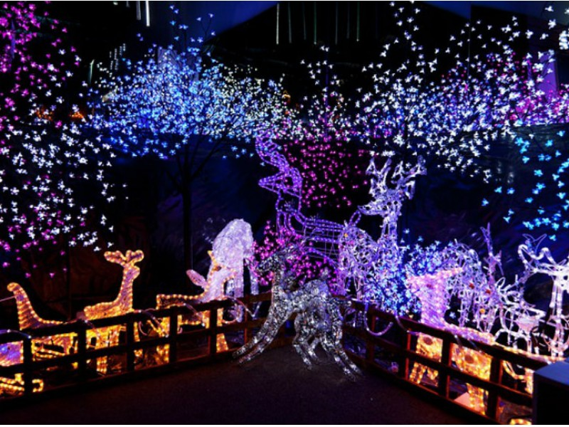 Marvelous Advance Purchase Of Wild Lights Tickets Advised. » Photo Gallery