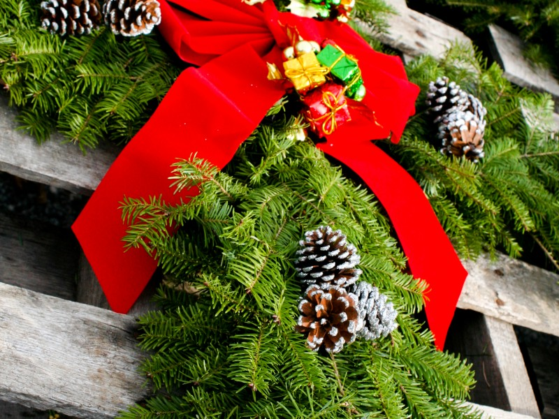 10 Places To Buy A Christmas Tree