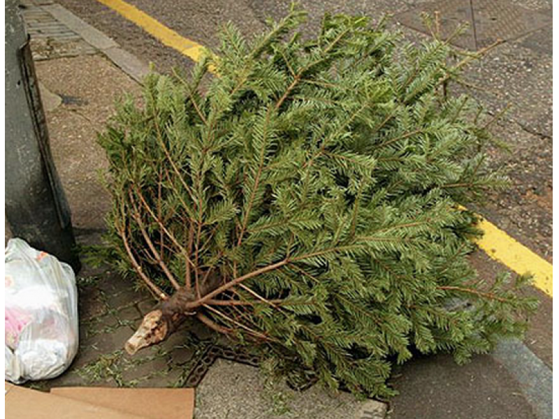 now what do we do with our christmas tree - What To Do With Old Christmas Trees
