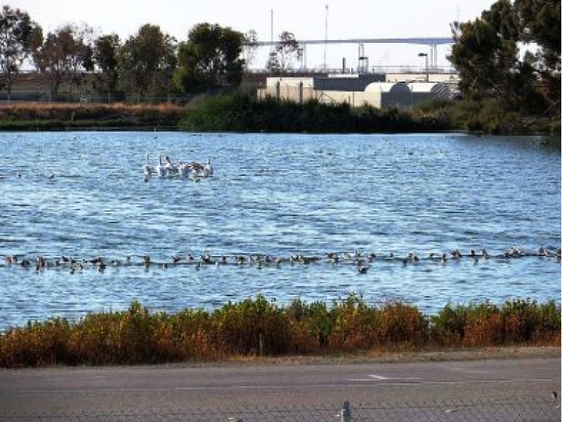 Amgen Lab Explodes Ducks Are Dying In Redwood City Mom Turns In Purse