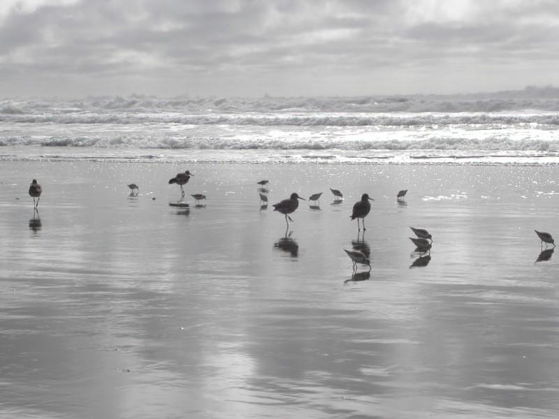 Dog Friendly Beach Half Moon Bay Off Leash