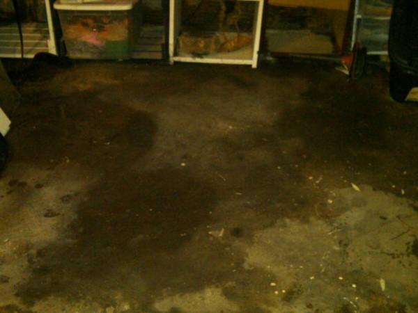wet basement here 39 s a lesson in water backup 101 royal oak mi