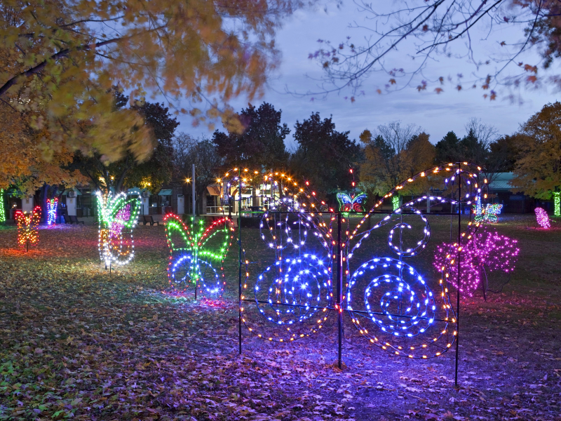 See the Detroit Zoo in a Whole New Light - See The Detroit Zoo In A Whole New Light Fenton, MI Patch