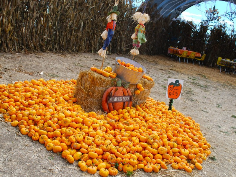 School tours | morgan hill pumpkin park at uesugi farms | morgan.