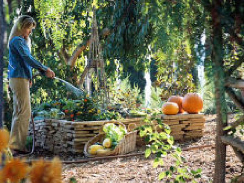 Tips for gardening in the fall west cobb ga patch - Fall gardening tasks ...