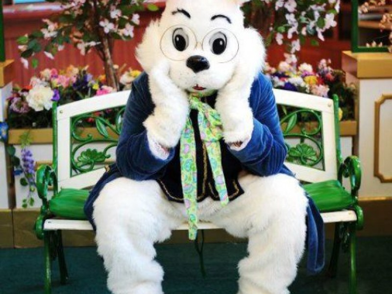 Easter bunny to arrive at lakeside mall saturday shelby for Call the easter bunny phone number