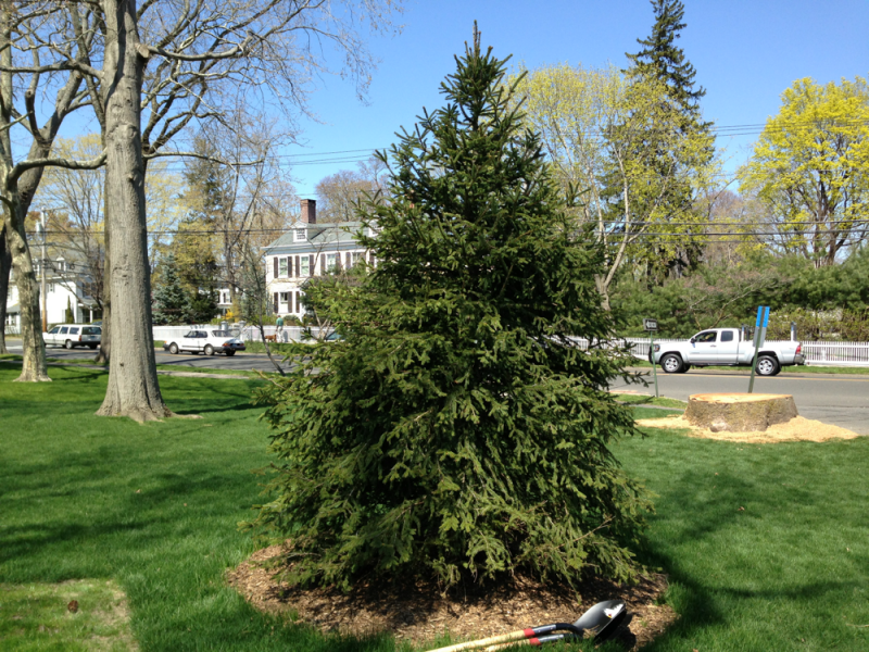 milford Celebration ct trees of