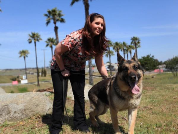 Sergeant Rex Heroic Bomb Sniffing Dog Dies New City
