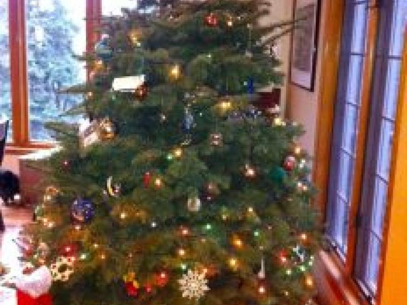 George C Marshall Boosters Christmas Tree Sale Starts Nov 30