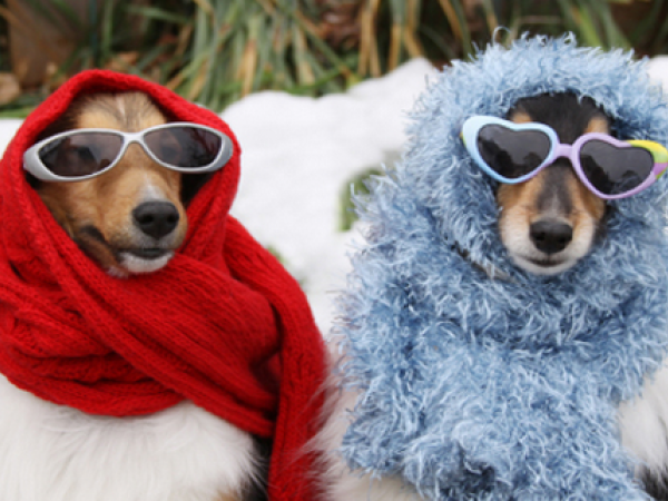 Can Dogs Get The Cold From Humans