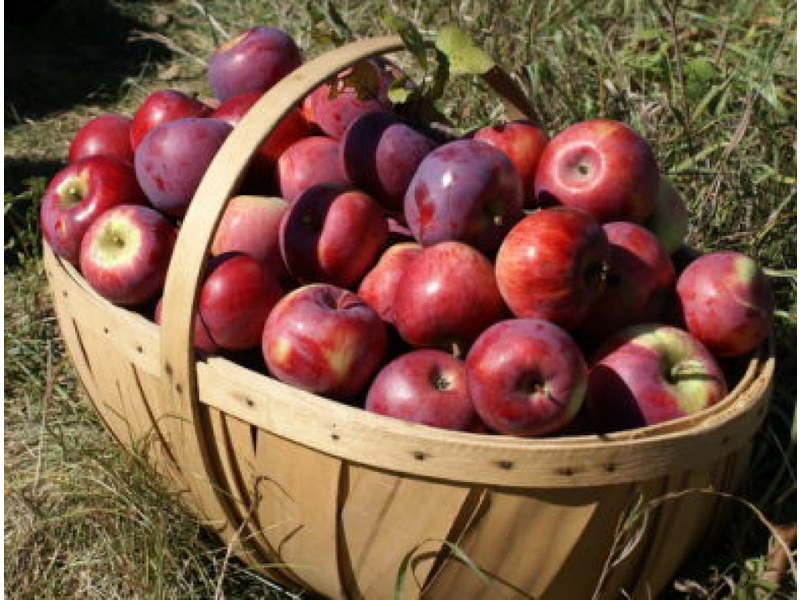 Fall 2014 Where To Pick Your Own Apples In Northern