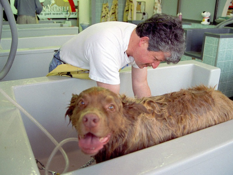 Poll self service doggie wash at car wash shelton ct patch solutioingenieria Image collections