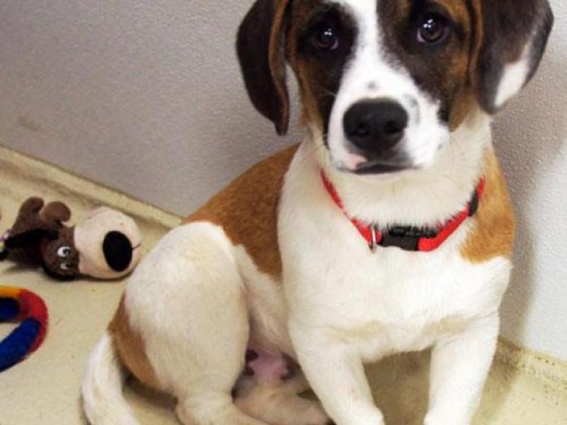 FOUND: Five-Month-Old Puppy Found Saturday