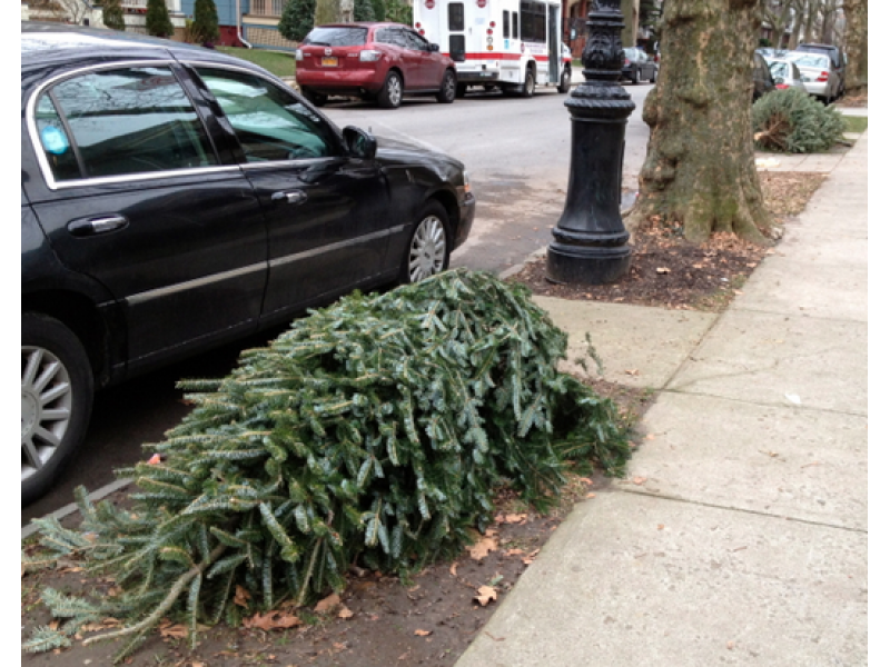 How to Get Rid of Your Christmas Tree in Fairfax