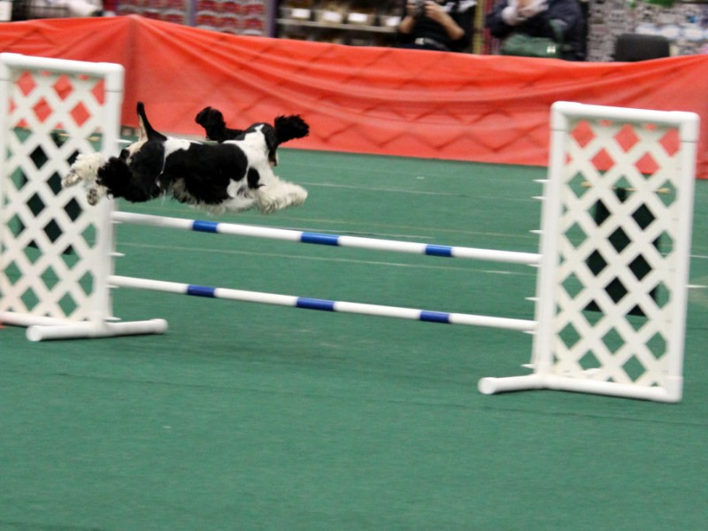 Crown Classic Dog Show