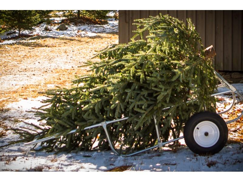 Free Christmas Tree Pickup - Troop 55 Fundraiser