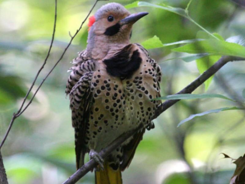 common birds in virginia gallery
