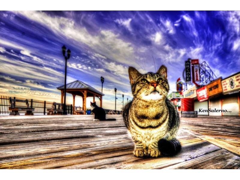 Feral Cat Rescue Nj