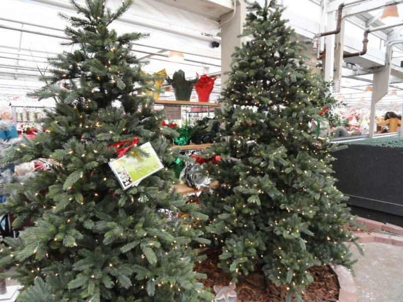 where to buy or rent christmas trees cut living or artificial in woodinville woodinville wa patch - Rent A Decorated Christmas Tree