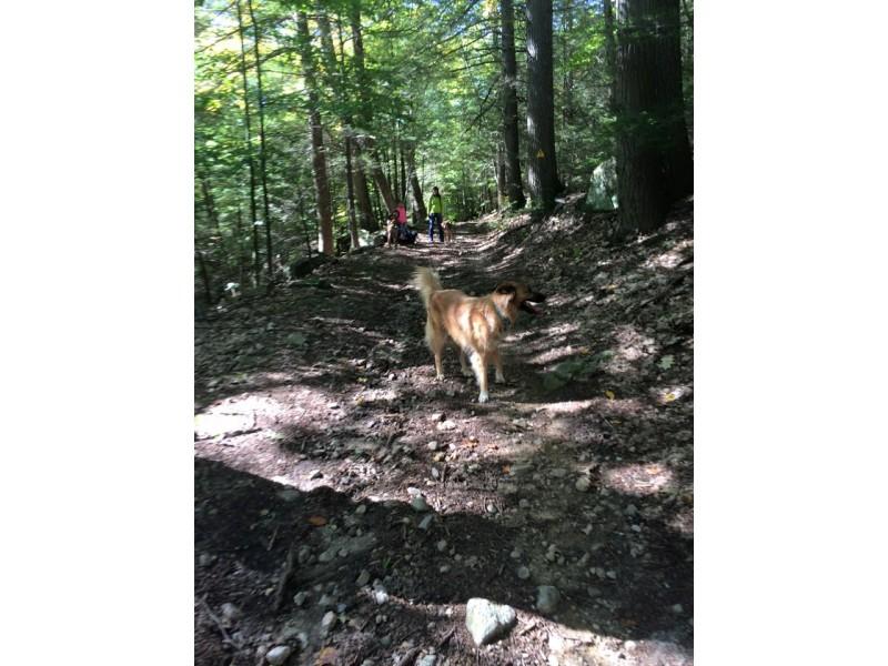 Centennial Park Wellesley Dog