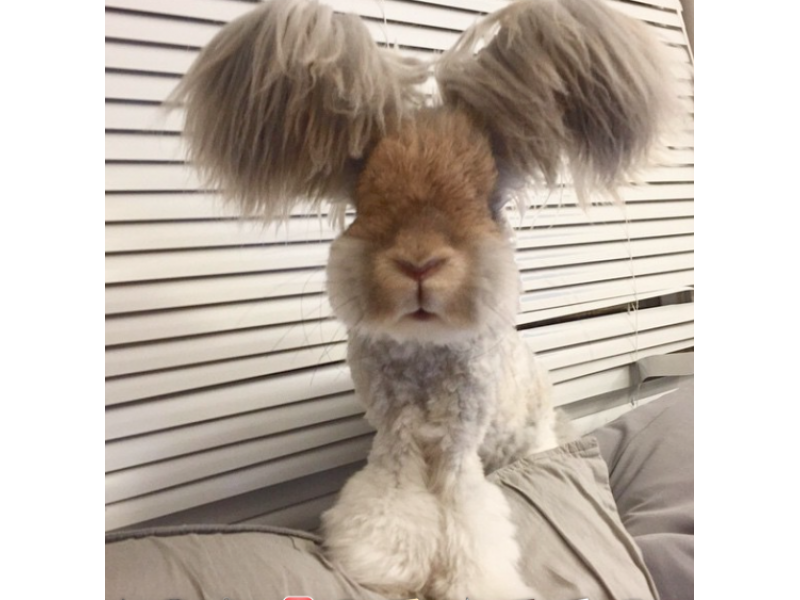 Explosively Cute Bunny With Ponytails Is Internet Smash Natick