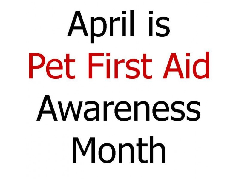 Pet First Aid W Red Cross Certification Merrimack Nh Patch