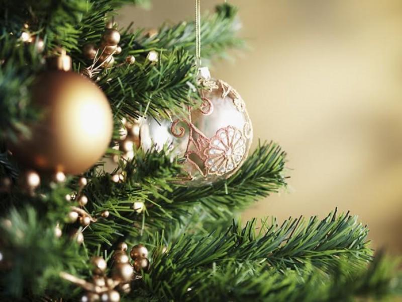 Christmas Trees For Sale At Fairfax High School Fairfax