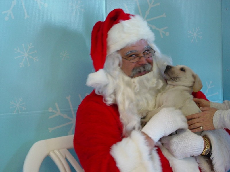 Santa Claws at Petsmart Chapel Hill... photos with your ...